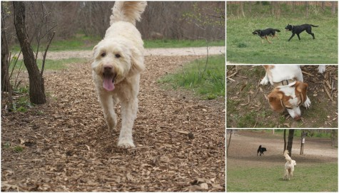 The vast seven acres of MuttLand Meadows provides constant stimulation for every Dog.