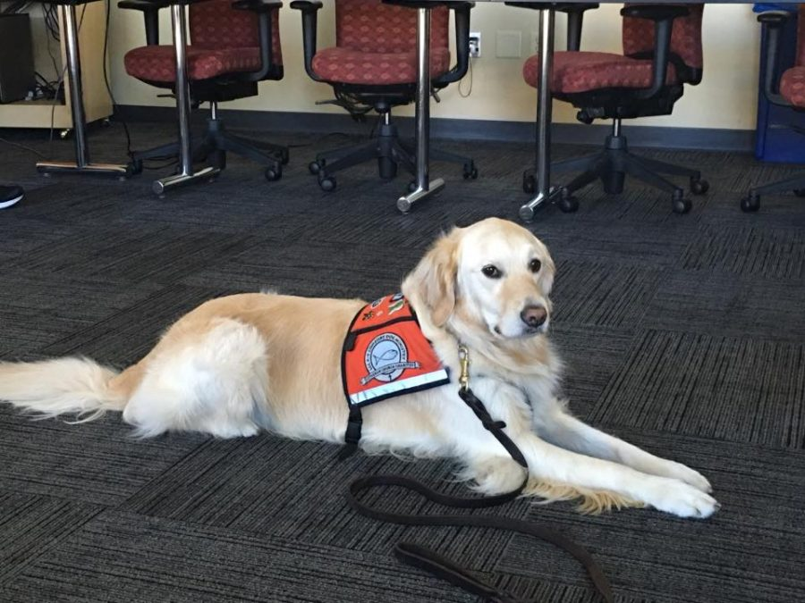Zoey offers her services as a comfort dog at Concordia University and Columbia Saint Mary's Ozaukee.