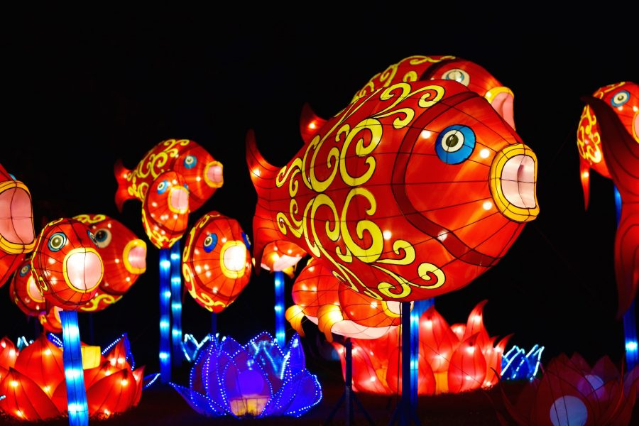 shedding some light on the china lights festival the highlander online