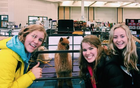 This ain't your mama's llama: Wisconsin Alpaca & Fiber Fest