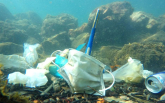 Despite the positive changes the pandemic has brought, severe plastic waste has been evident across worldwide waterways and habitats resulting from COVID-19 materials.